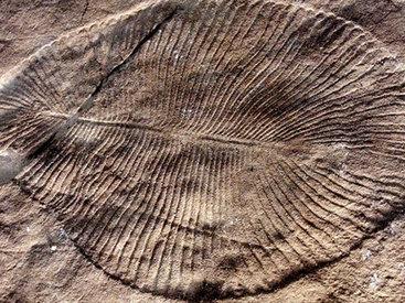 Ученые обнаружили следы древнейшего секса на Земле