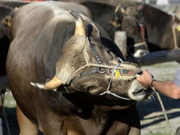 На фестивале в Испании бык ранил 12 человек