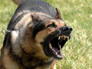 В Москве бойцовская собака искусала ребенка