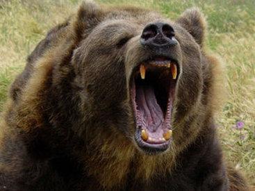 В России медведь загрыз мужчину