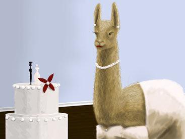 В Перу отметили свадьбу лам