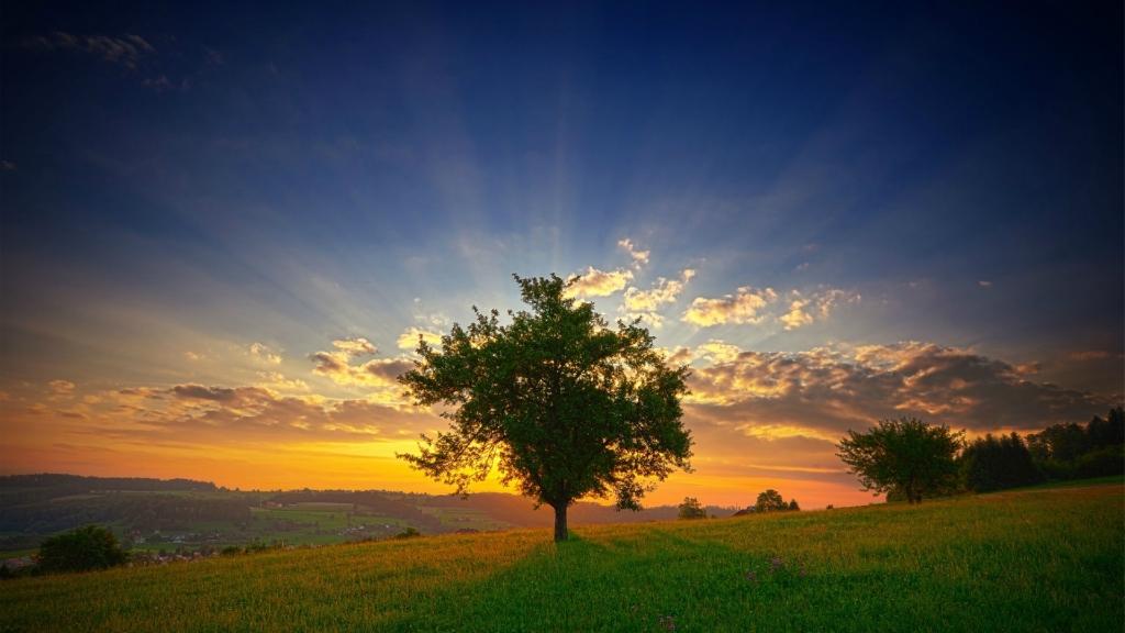 природа рассвет деревья  № 1158223 бесплатно