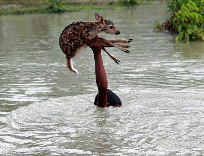 Мальчик чуть не погиб, пытаясь спасти утопающего олененка