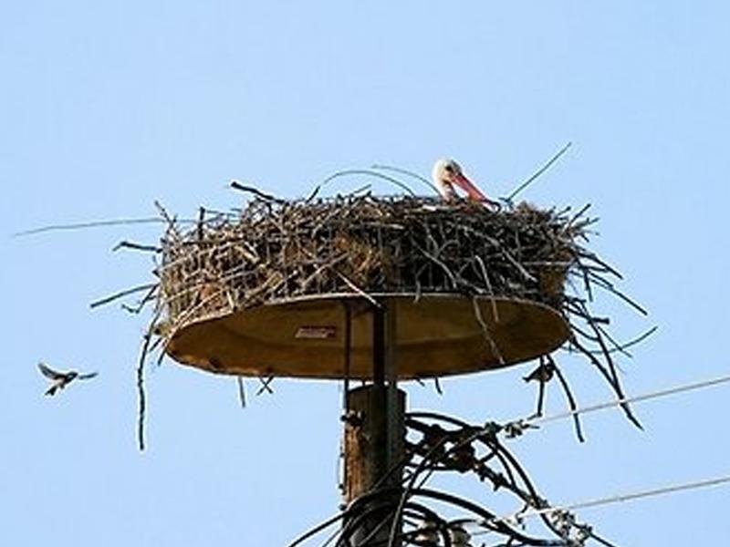 Как сплести гнездо для аистов своими руками