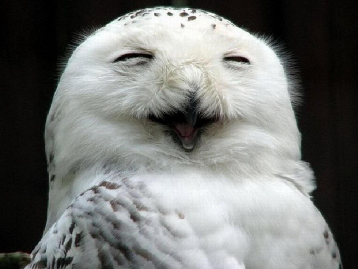 совы смеются картинки знать