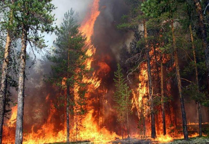 В Греции бушует сильный лесной пожар