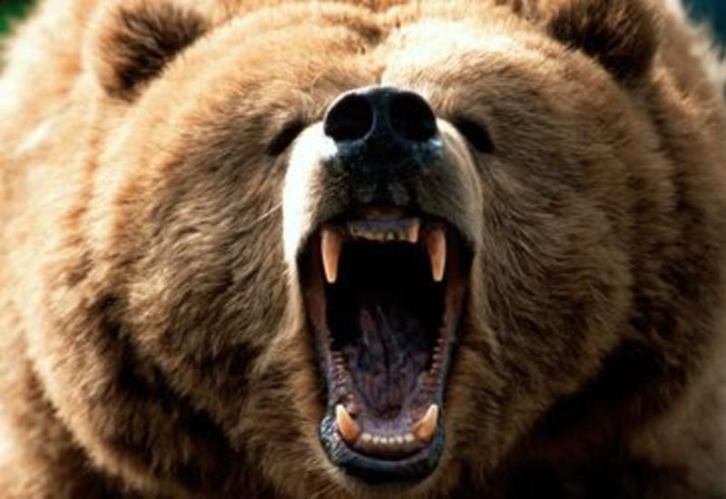 Медведь едва не разорвал двоих детей