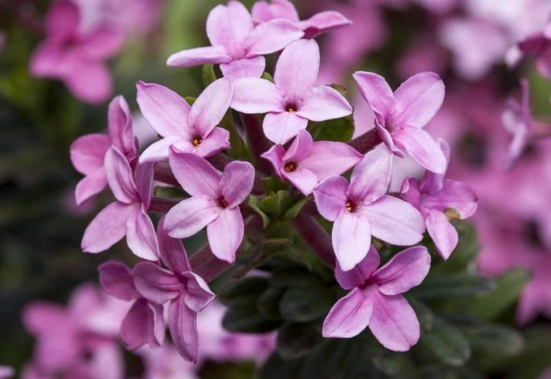 Самые смертельно опасные цветы в мире