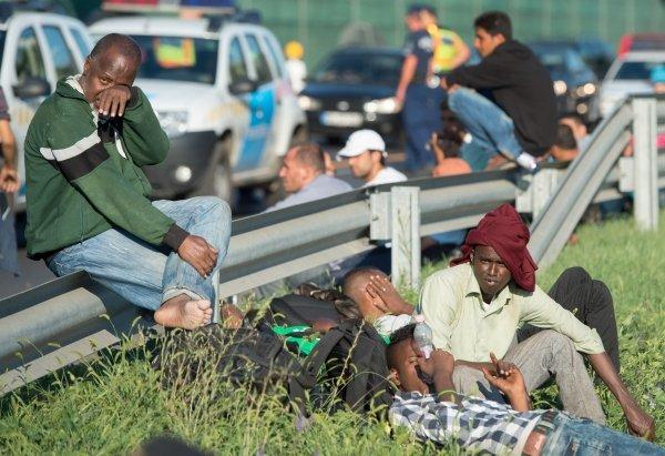 Беженцы привезли в Европу страшные болезни