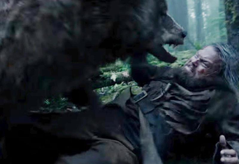 Медведь не насиловал Ди Каприо