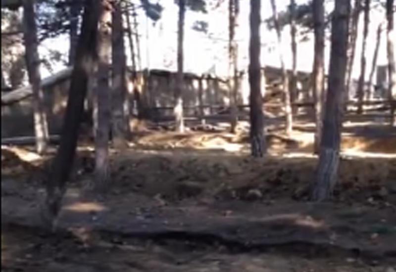 "Уничтожают лесополосу около ст. метро ""Нефтчиляр""?"