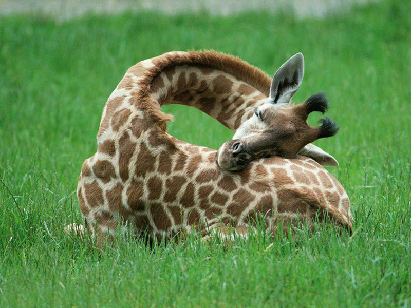 все самое интересное о животных с картинками известной