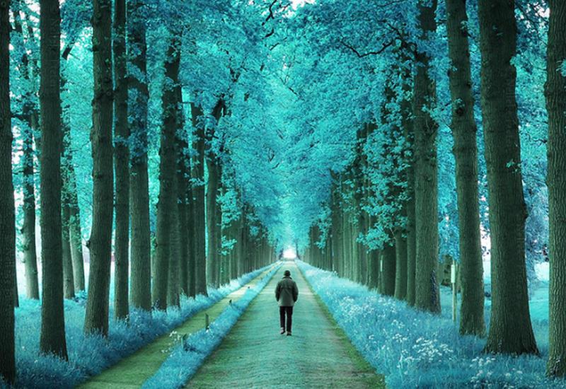 Уникальные фото лесов Нидерландов, какими их мало кто видел