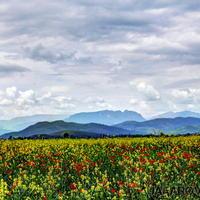 """Невероятный Азербайджан: все краски Родины <span class=""""color_red"""">- ФОТО</span>"""