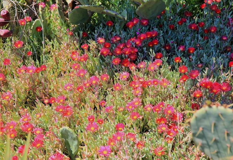 Разноцветная весна в Мардакянском дендрарии