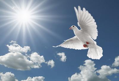 """""""Воскресное чтиво"""" на Day.Az: «Weisse Taube. Белый голубь»"""