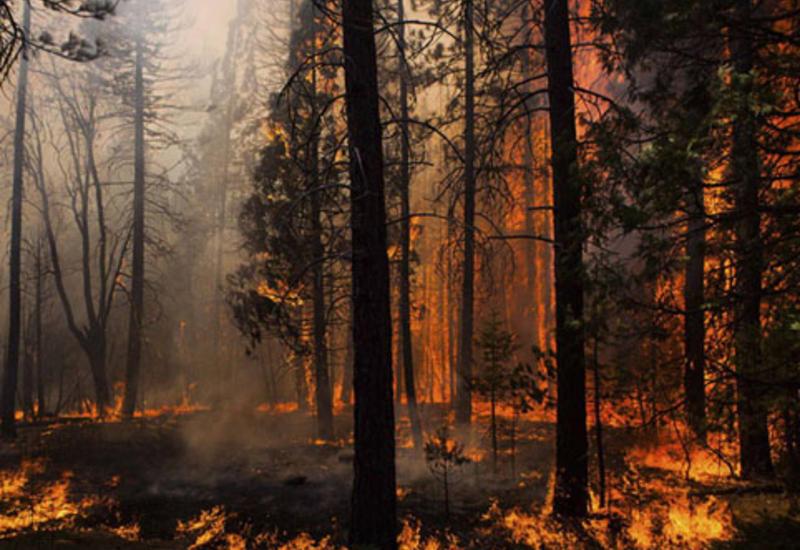 В Азербайджане второй день горит лес