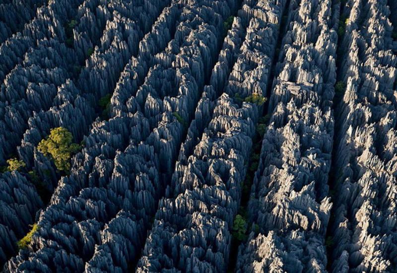 Каменный лес Цинги: это стоит увидеть своими глазами