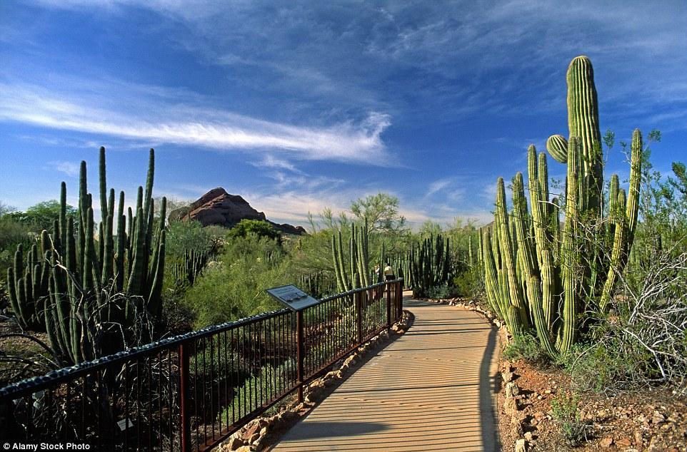 Ботанический сад в пустыне в штате Аризона