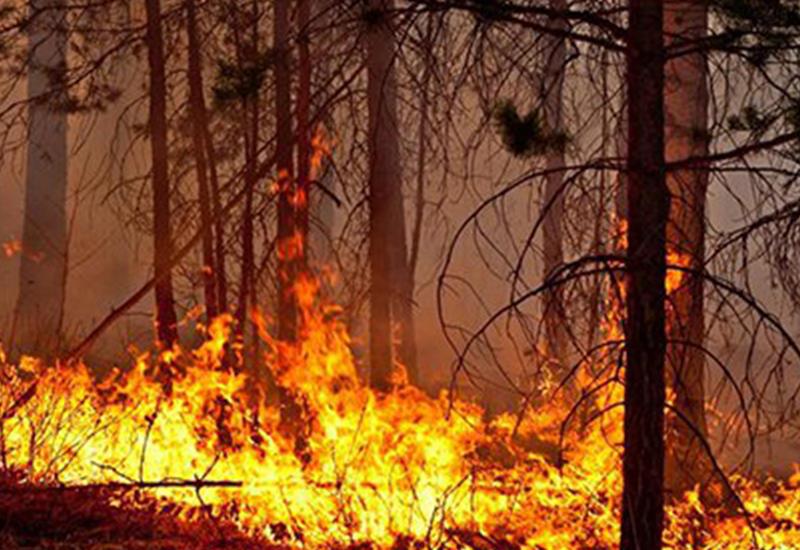 Увеличилось число жертв пожаров в США