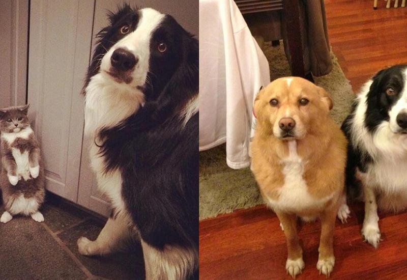 20 провинившихся собак, которым очень стыдно за содеянное