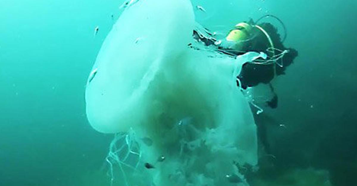 уже смешные картинки про медуз и водолазов жил лесной