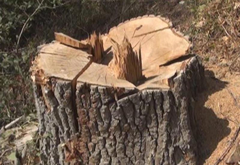 64-летний мужчина умер под спиленным им деревом