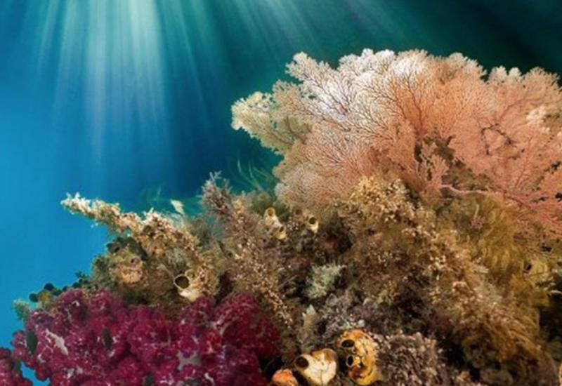 Фотограф бросила работу ради путешествий и яркого мира коралловых рифов