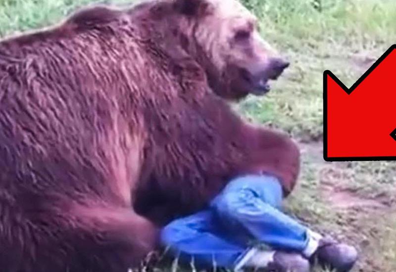 10 знаменитостей, погибших по вине животных