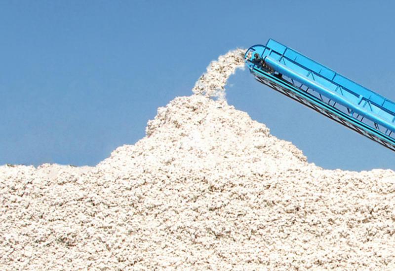 В Азербайджане собрано почти 300 тыс. тонн хлопка