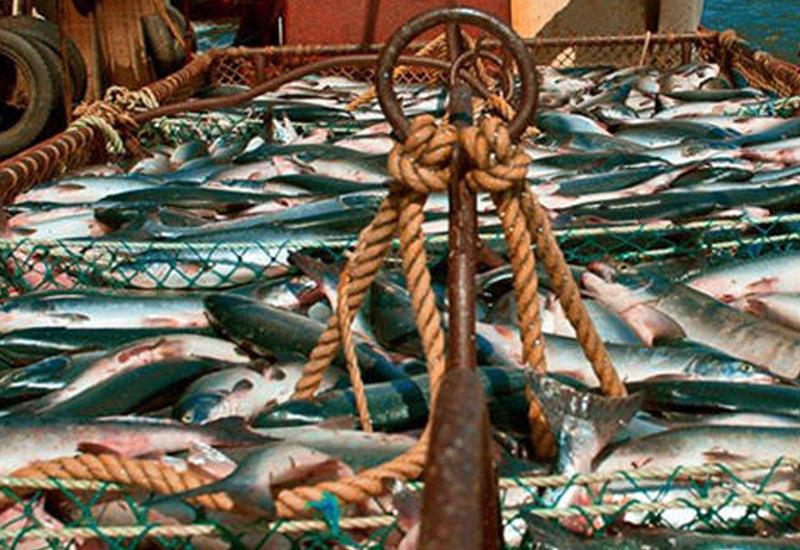В Азербайджане приватизируют рыбный завод