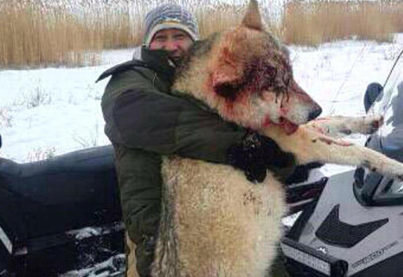 большой волк в ростовской области фото деньги