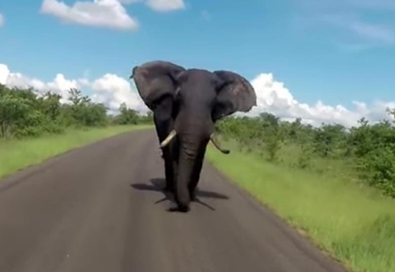 Туристы пережили кошмар в национальном парке в ЮАР