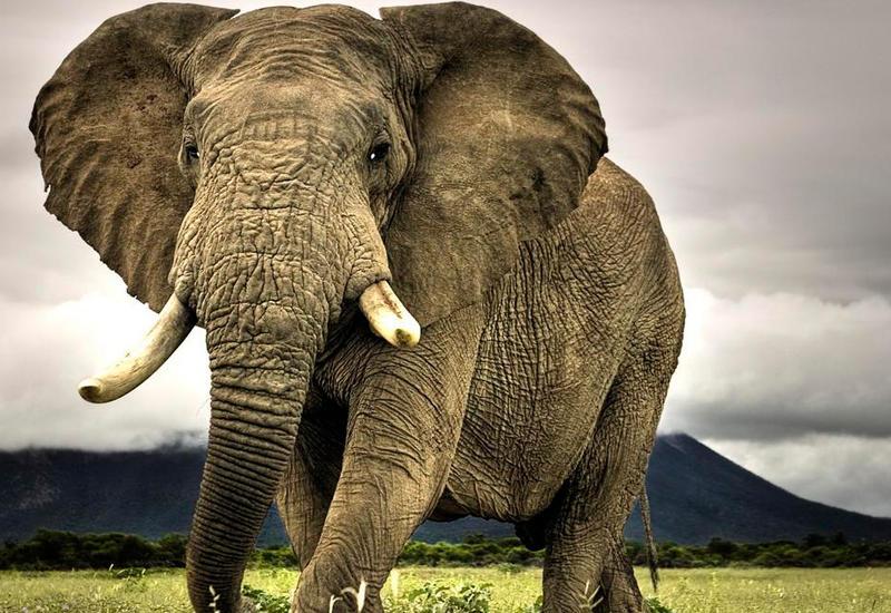 Парень чудом спасся от разъяренного слона