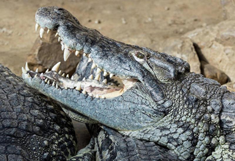 В Тунисе посетители зоопарка забили крокодила камнями