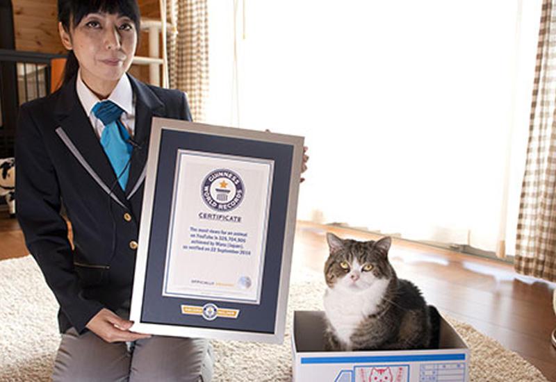 Самый популярный кот в мире покорил судей Книги рекордов Гиннесса