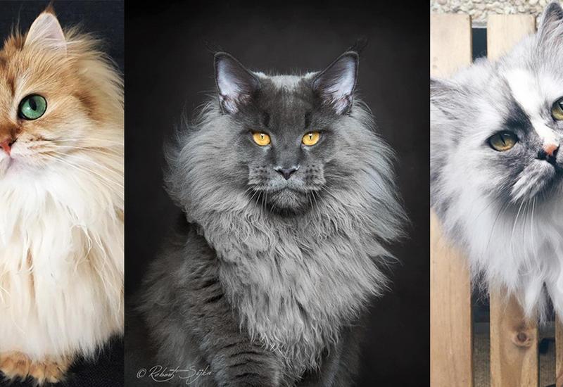 20 самых красивых кошек в мире
