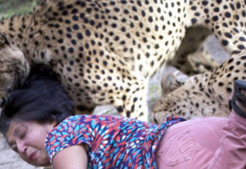 Гепард напал на туристку в заповеднике в ЮАР