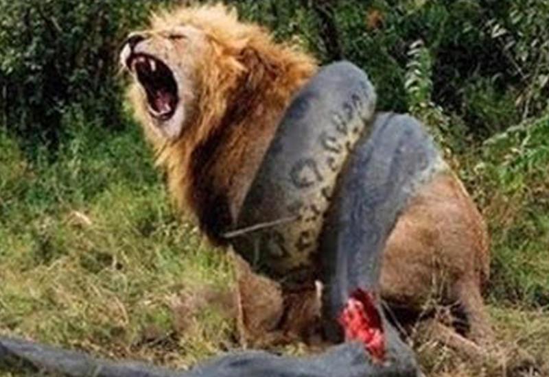 10 жестоких схваток животных с неожиданным концом