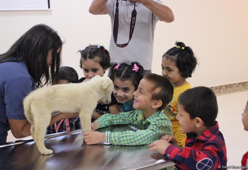 IDEA подарила детям радость дружбы с животными
