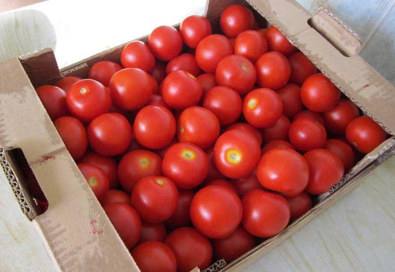 Снимаются ограничения на ввоз в Россию томатов для еще некоторых азербайджанских предприятий