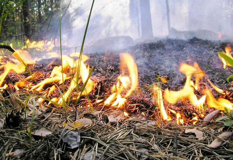 В Национальном парке Гызылагадж начался пожар