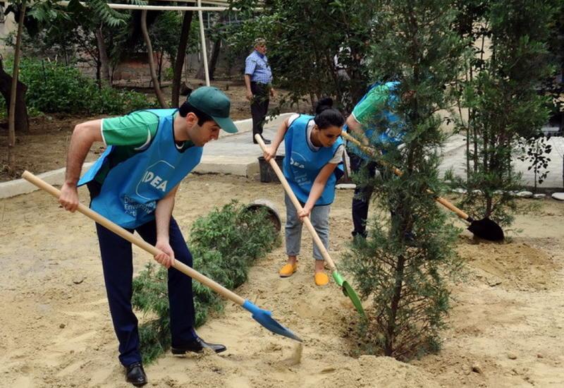 По инициативе IDEA восстановлены зеленые насаждения на улице Асифа Магеррамова в Баку
