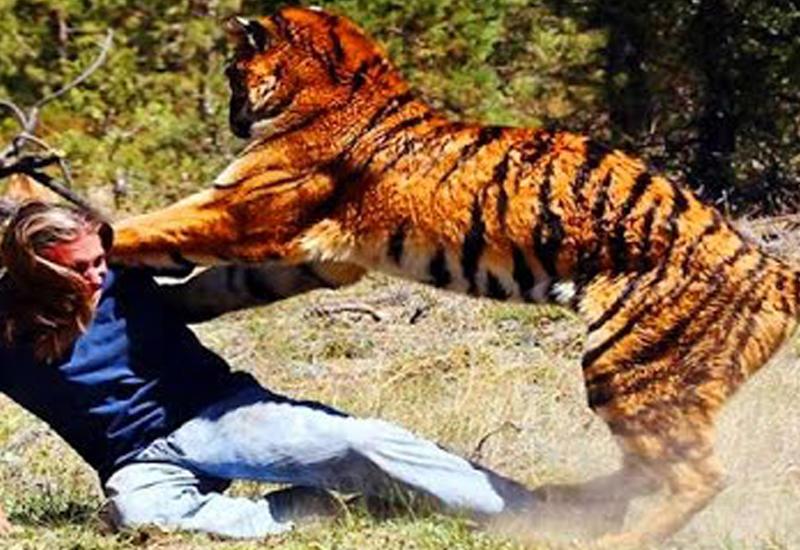 5 нападений животных, снятых на камеру