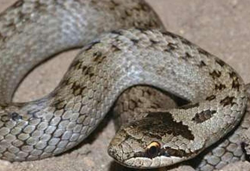 В Ереване в детском саду обнаружили змею