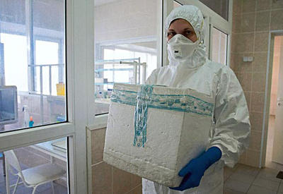 В Грузии зафиксирован вирус Денге