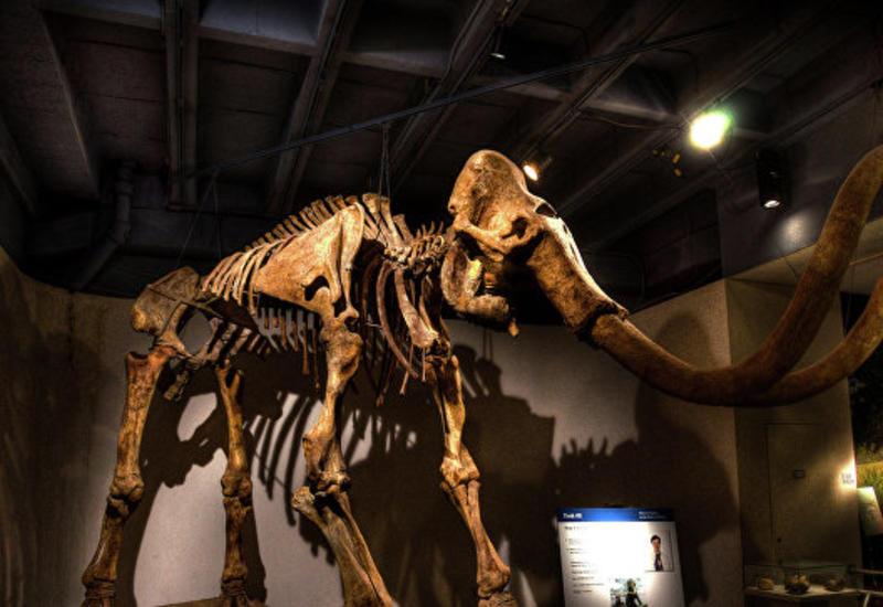 Уральский дачник выкопал в огороде кости мамонта