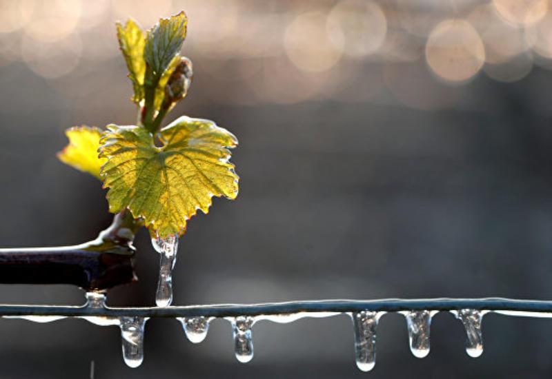 Францию ждет рекордное сокращение производства вина