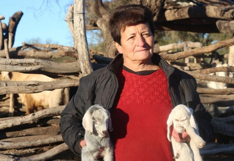 """В Аргентине появился на свет козленок-мутант с """"человеческим лицом"""" <span class=""""color_red"""">- ВИДЕО</span>"""