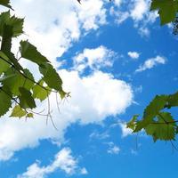 Синоптики обещают дождливую и ветреную погоду